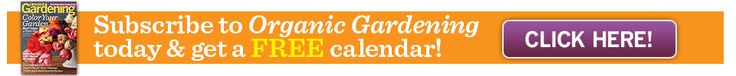 Healthy Recipe: Butternut Squash, Apple, and Cranberry Gratin: Organic Gardening