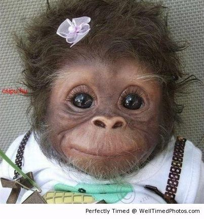A cute baby monkey – How adorable is this little one? Those eyes may just make you stare at it all day.