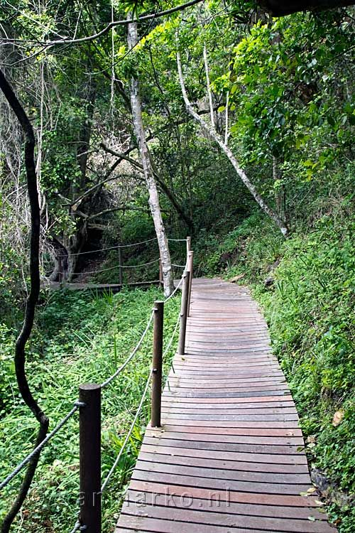 The deck path of Storms River Mouth Rest Camp to the Suspension Bridge in Tsitsikamma National Park in South Africa