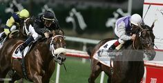 Kelly's Landing(2001)Patton- Best Game By Great Above. Outcross In First 5 Generations. 27 Starts 10 Wins 3 Seconds 2 Thirds. $1,853,831. Won Dubai Golden Shaheen (UAE-1), Aristides BC H(G3), Phoenix BC S(G3), Mr Prospector S(G3), 2nd Aristides BC H(G3). Retired In 2009. Gelding. Became Trainer Eddie's Kenneally Stable Pony.