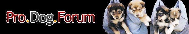 Dog Forum