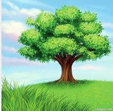 17 Best images about El árbol gri gri on Pinterest   Black sea ...