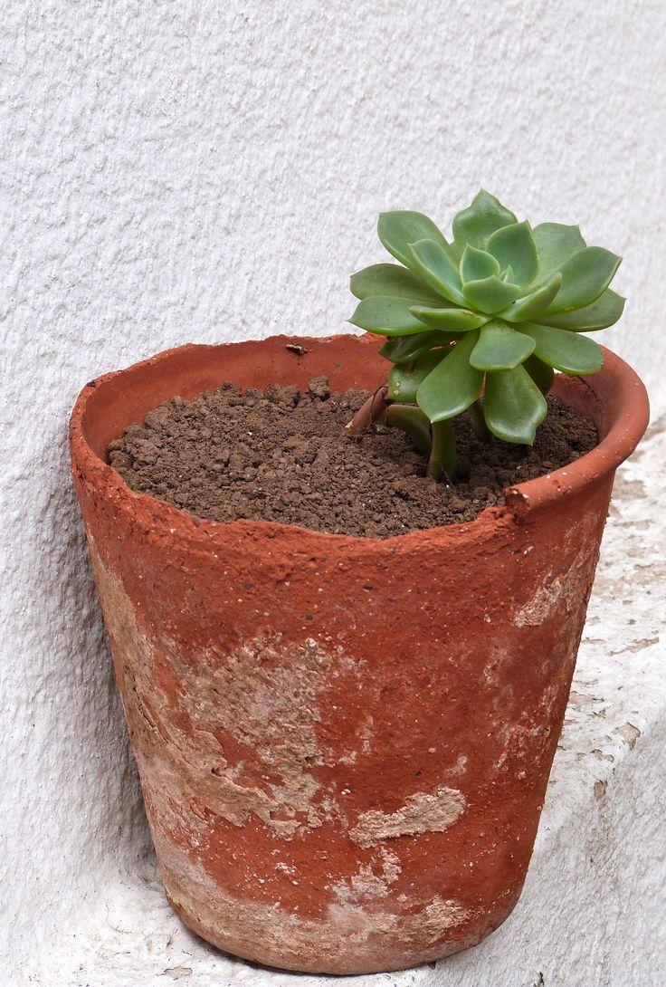 Mi planta!
