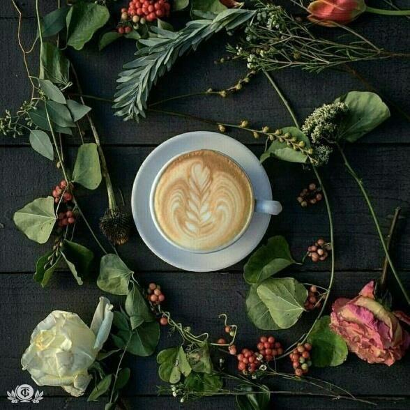 Утренний кофе РЕЦЕПТ Побалуйте своих близких утром этим необычным рецептом кофе. Для его приготовления вам понадобятся такие составляющие: 2 столовые ложки молотого кофе арабика 1 столовая ложка меда 1 чайная ложка сахара 100 гр молока 25 гр сливок 50 гр ванильного мороженного +лимон В турке или кофеварке варим 50 гр классического крепкого кофе. Остывший напиток процеживаем через мелкое ситечко и растворяем в нем одну столовую ложку меда и одну чайную ложку сахара. Добавляем молоко, сливки и…