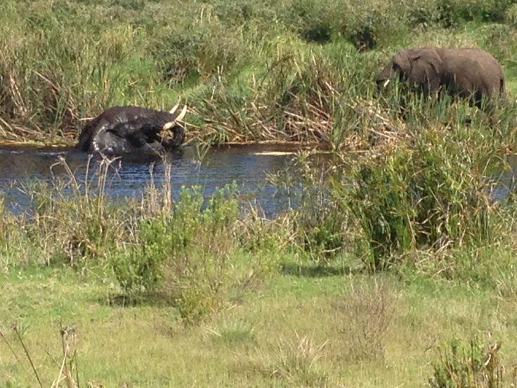 Elefantenbadewanne in Botlierskop