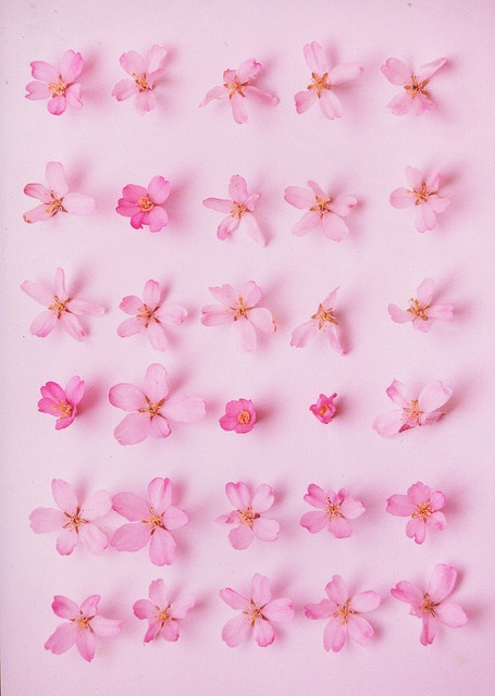 pink flowers on the wall for girl's room