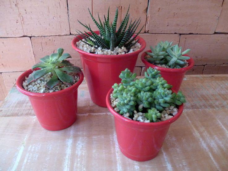 Como trocar plantas de vaso – Faça Você mesmo