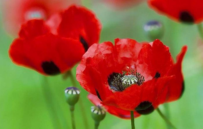 Top 5 resources for Remembrance Day including pdf version of M is for Mates; Why Remember Understanding Remembrance Day and Organising a Remembrance Day Ceremony