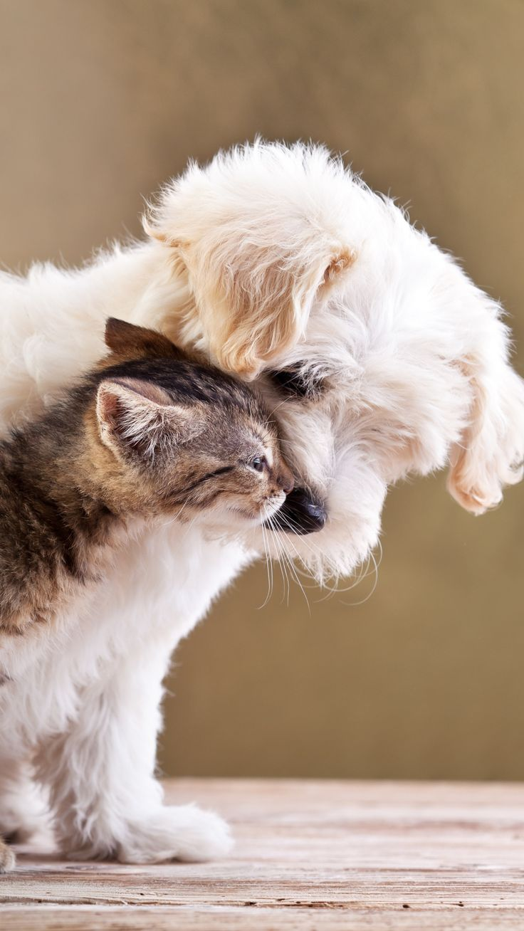 puppy, kitten, friends, animals, caring, tenderness