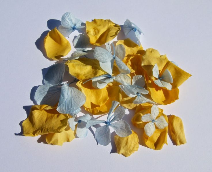 The Confetti Blog: Yellow and Blue Wedding Ideas from The Real Flower Petal Confetti Company - Yellow Rose Petals ans Blue Hydrangea Confetti