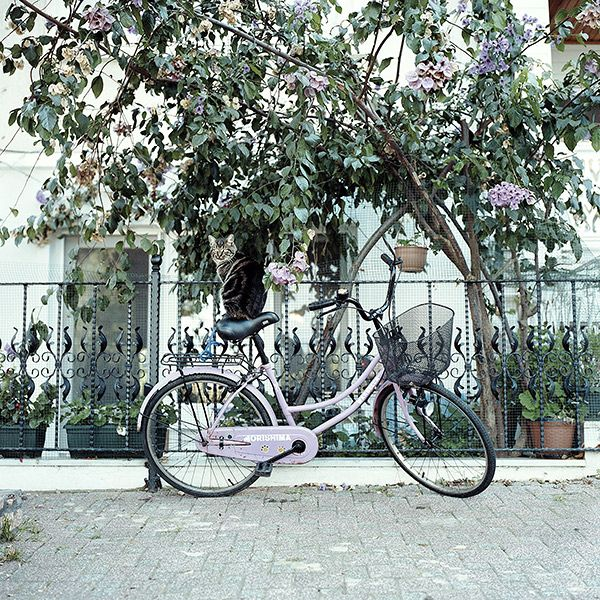Cat on a pink bicycle, 2015, Istanbul http://www.juliasmirnova.com/