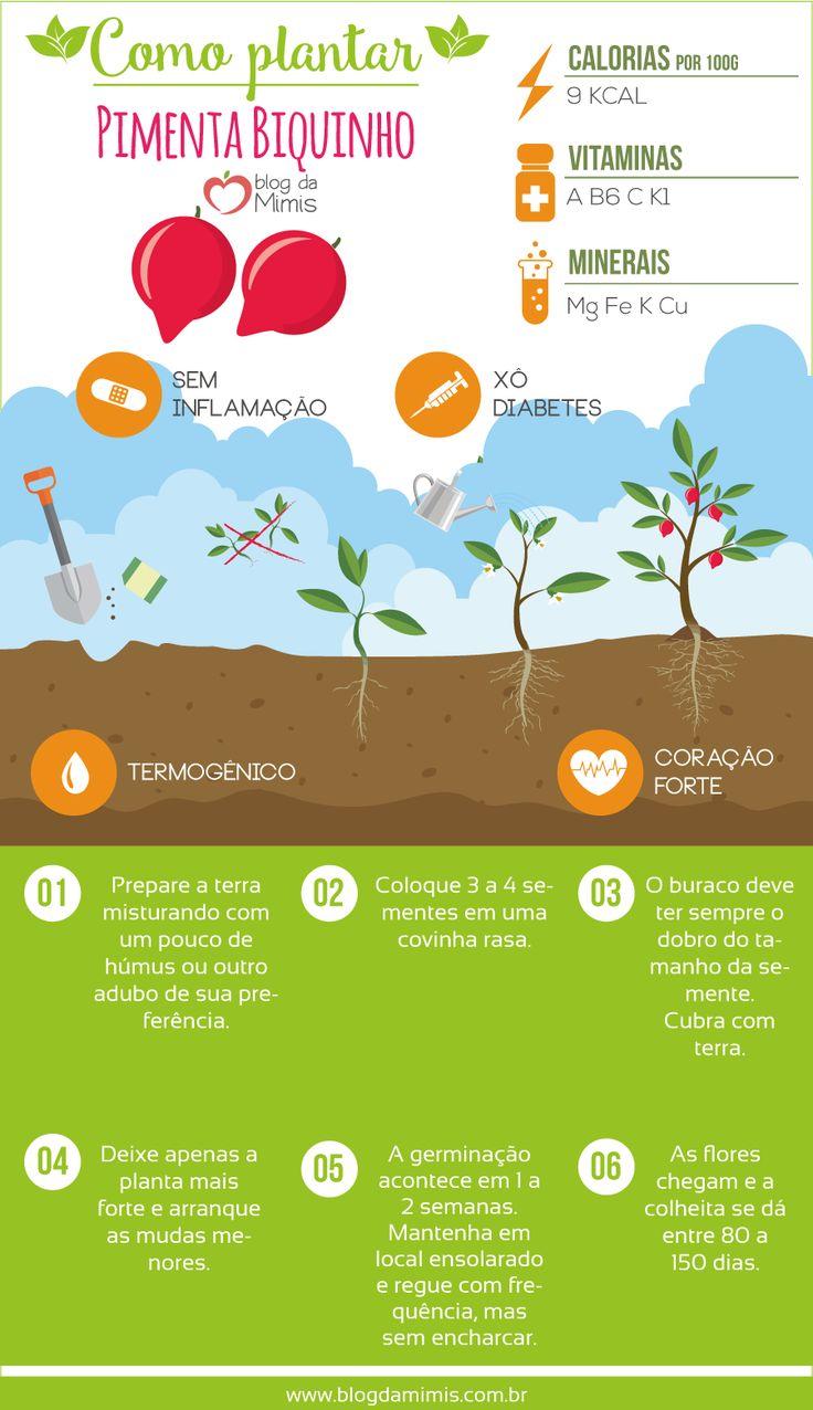 Pimenta biquinho: como plantar e seus benefícios na dieta - Blog da Mimis - Linda e com gosto incrivelmente suave, essa pimenta é perfeita para cultivar na horta e complementar a dieta de emagrecimento.