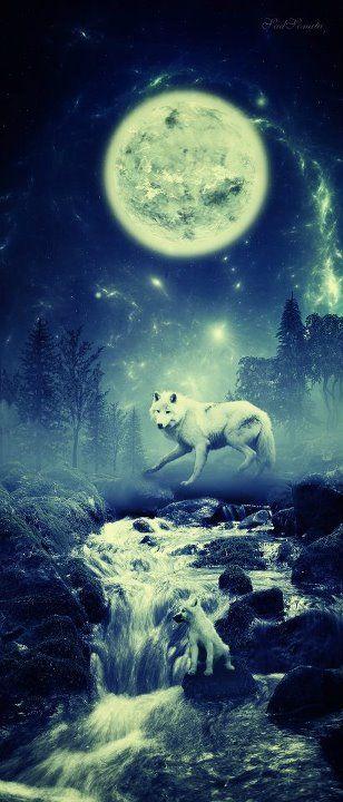 wolf moon                                                                                                                                                                                 Mehr