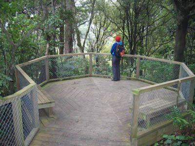 Otari-Wilton's Bush - Paths and Tracks