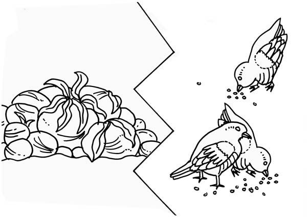 Some Seed Was Eaten By Birds In Parable Of The Sower Coloring Page Color Luna Pokemon Coloring Pages Coloring Pages Disney Coloring Pages
