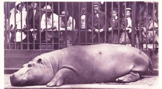 8. Hayvanat Bahçesindeki Hipopotam - #Juan #Carlos #Maria #Isidro (1852)