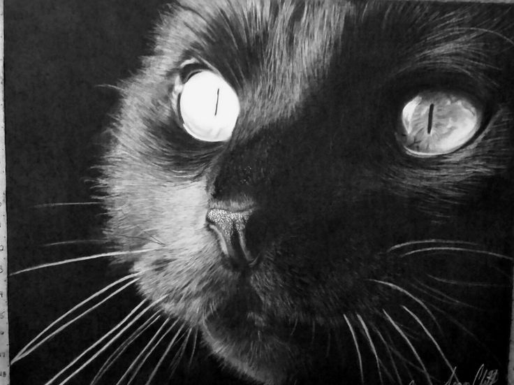 """Black cat"" graphite on fabriono artistico extra white hot press 140lb water colour paper."