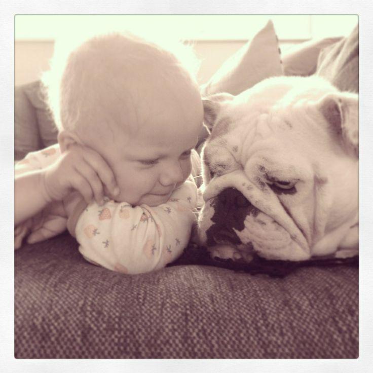 Engelsk bulldog, barn,