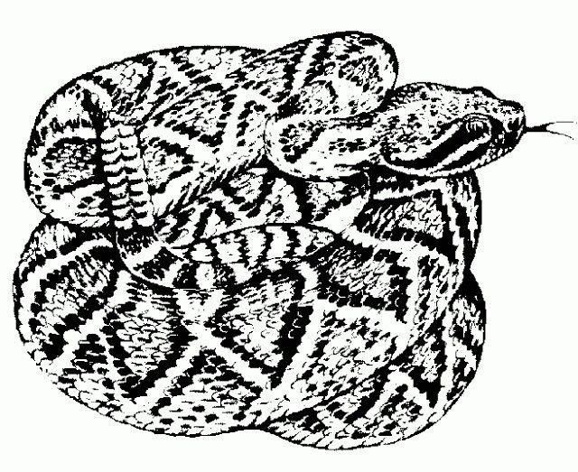 Rattlesnake Tattoo