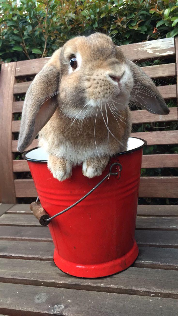 Ollie the rabbit