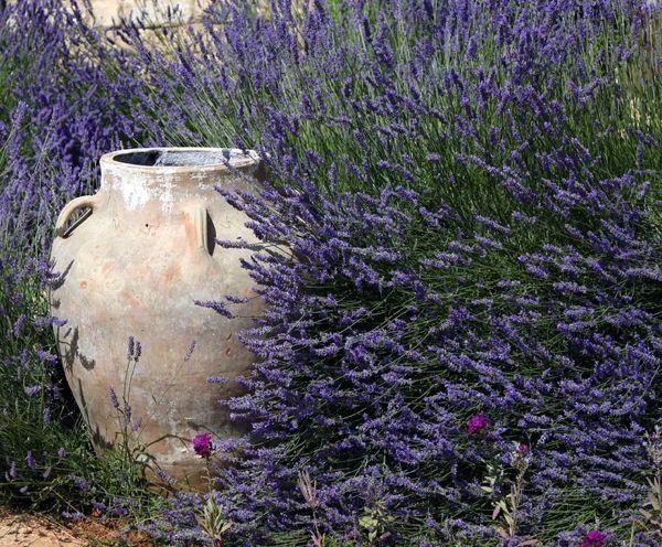 Lavender and stone vase