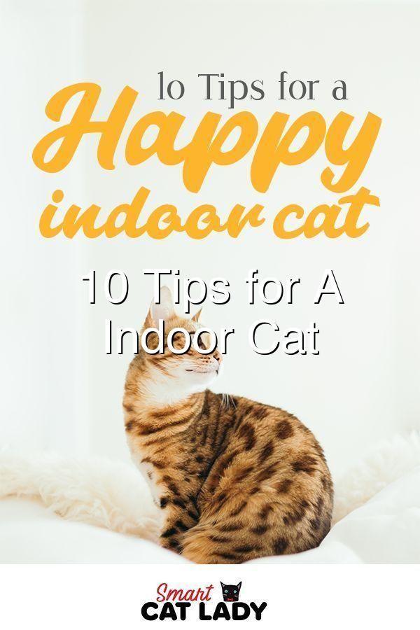 10 Tips For A Happy Indoor Cat Indoor Cat Cat Supplies Cats