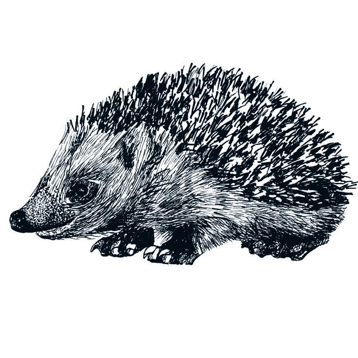 hegdehog drawing pen