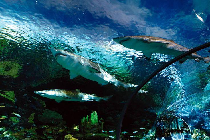 Ripley's Aquarium of Canada - Due to open summer 2013