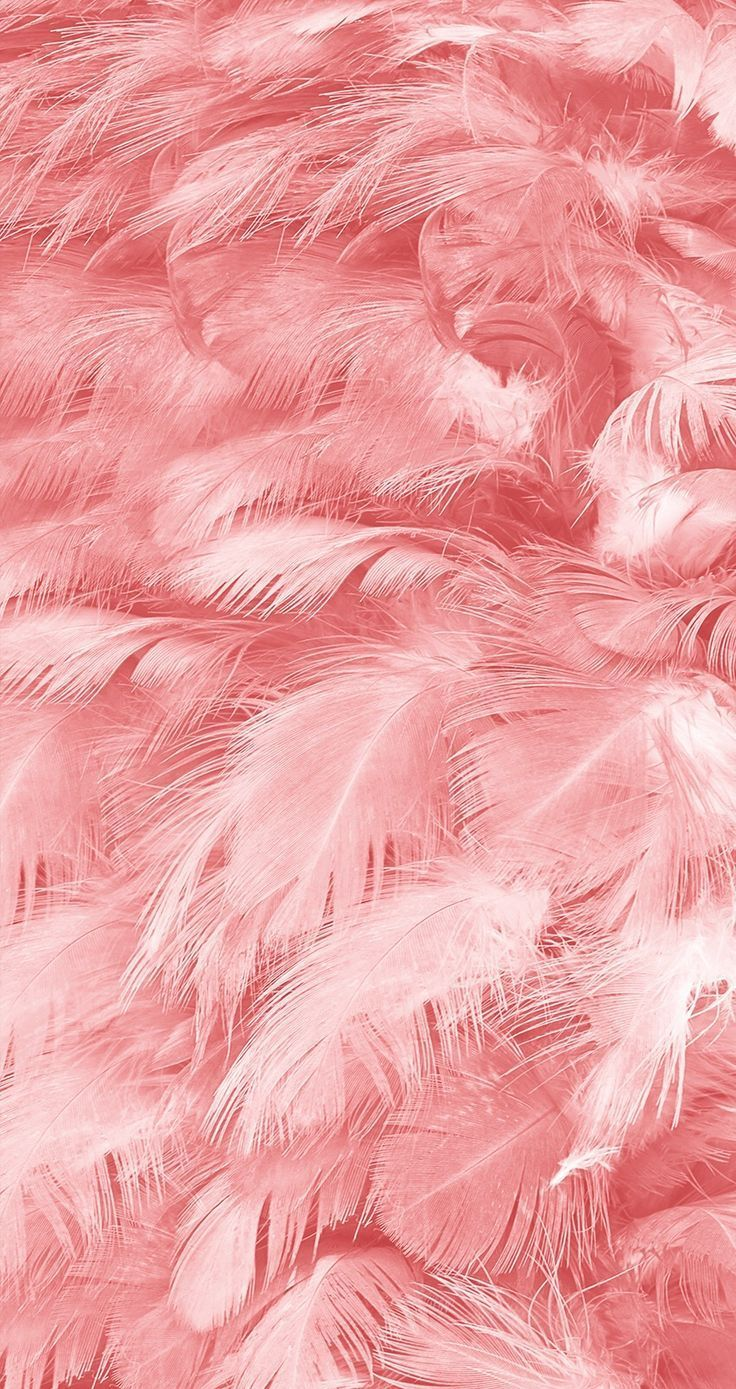 feather #pink