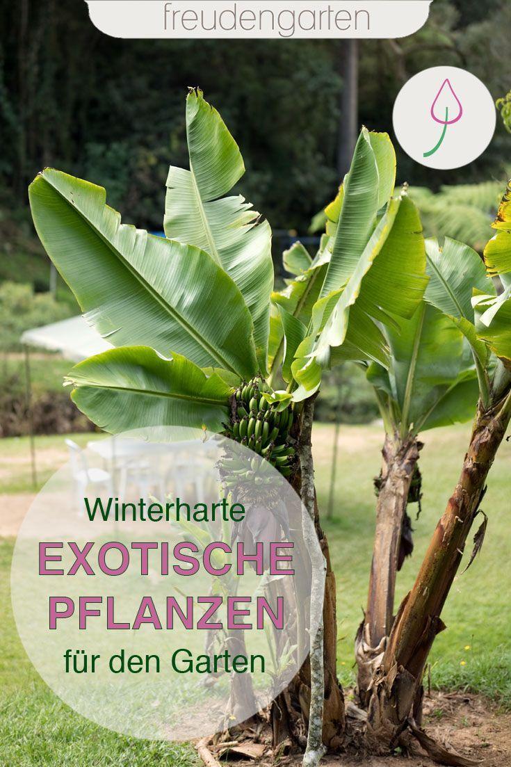 Exotische Pflanzen Im Garten In 2020 Exotische Pflanzen Pflanzen Garten Pflanzen