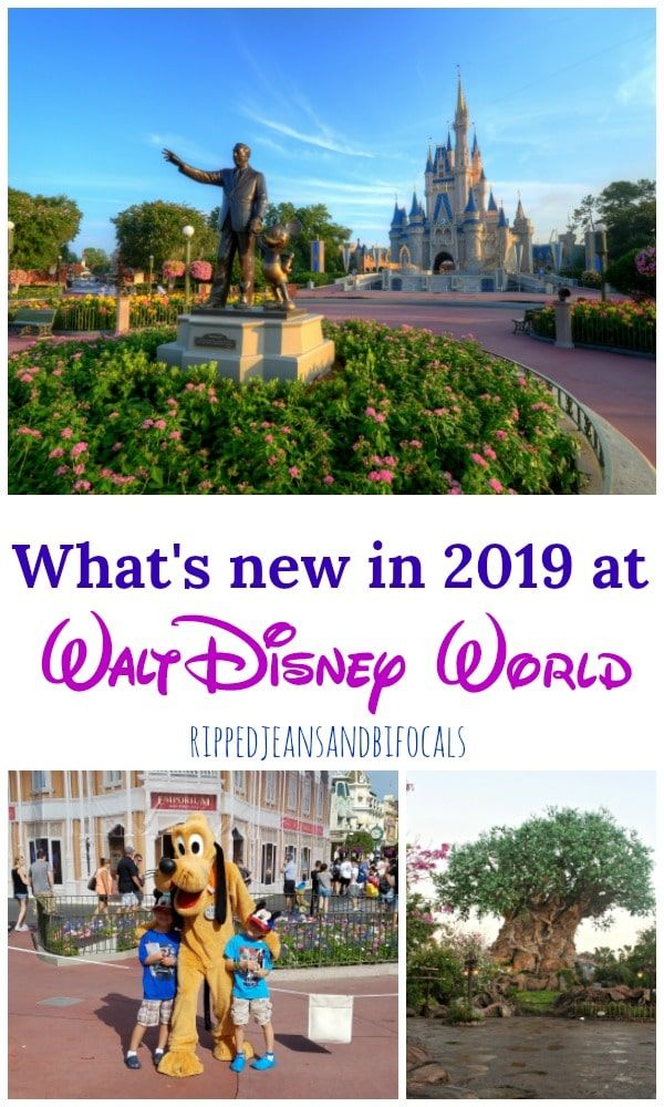 What S Coming To Walt Disney World In 2019 News From The Most Magical Place On Earth Ripped Jeans Bifocals Disneyworld Disneyvacation