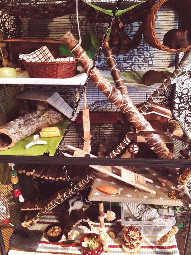 Rat cage, critter nation, forest theme, rat DIY - This is amazing !!!