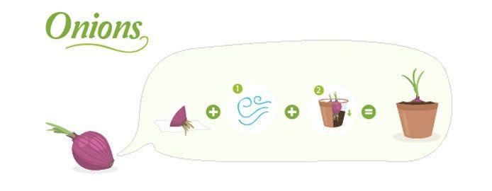 sedano coltivazione in vaso - Cerca con Google