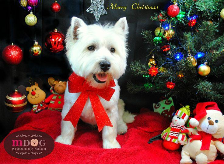 Merry Christmas Hamish!