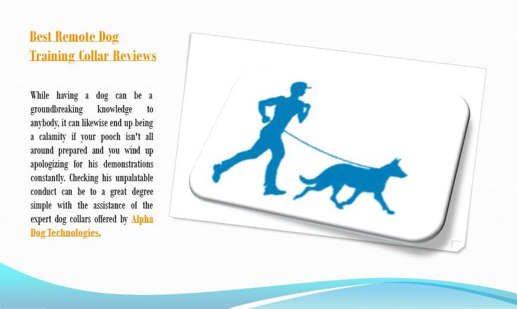 Best remote dog training collar reviews - https://www.alphadogcollars.com/ - While having a dog can be a groundbreaking knowledge to anybody, it can likewise end up being a calamity if your pooch isn't all around prepared and you wind up apologizing for his demonstrations constantly. Checking his unpalatable conduct can be to a great degree simple with the assistance of the expert dog collars offered by dogedcollars.