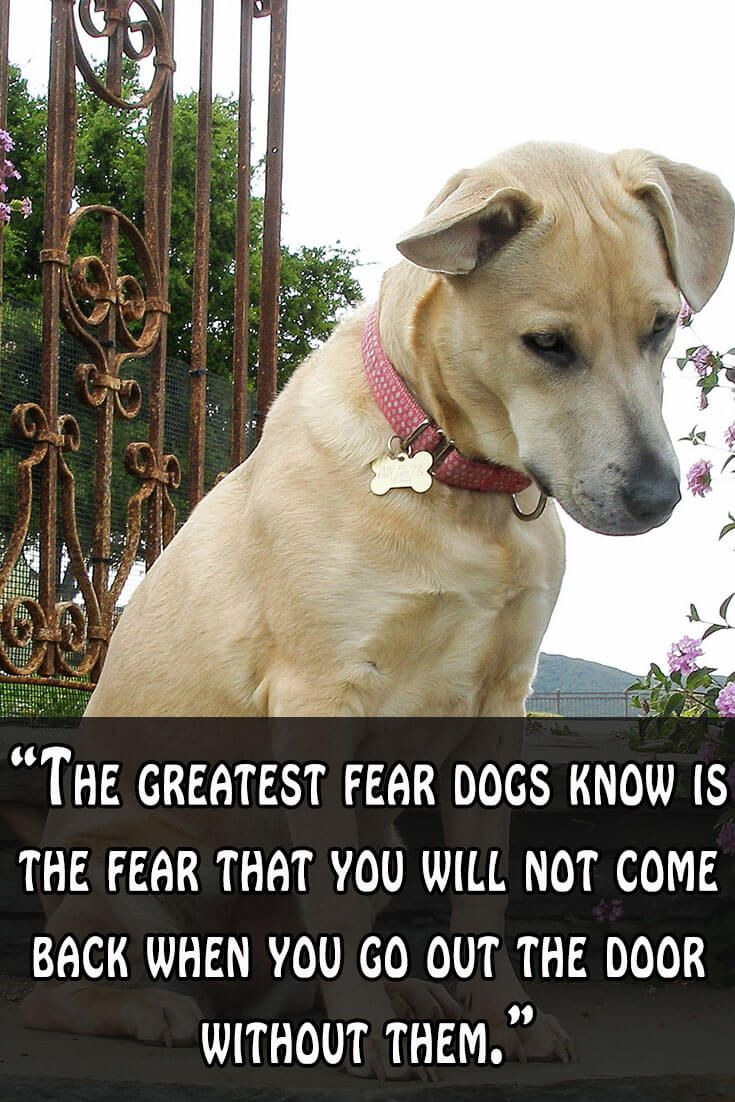 43 best dog quotes images on pinterest