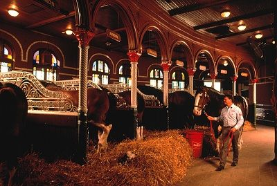 visit Clydesdale stables - Google Search