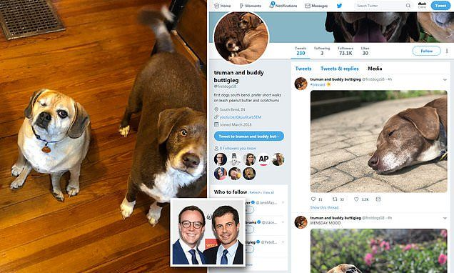 Mayor Pete Buttigieg S Dogs Truman And Buddy Are Twitter Famous Truman Buddy Pete