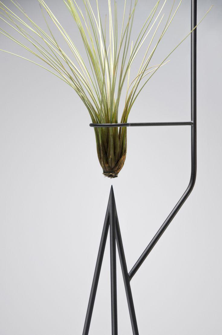 366 best plantes vertes et fleurs images on pinterest beautiful flowers beautiful gardens and. Black Bedroom Furniture Sets. Home Design Ideas