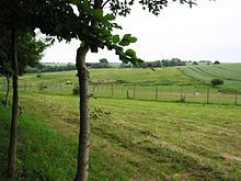 #Gras – Wikipedia  #Gass #Grass_like_plants #Greso