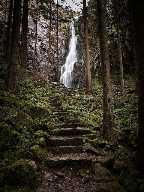 Hidden in the Forest by andywon - Burgbach Forest Stairs & Waterfall in the Black Forest, near in Bad Rippoldsau-Schapbach, Baden-Wurttemberg, DE.