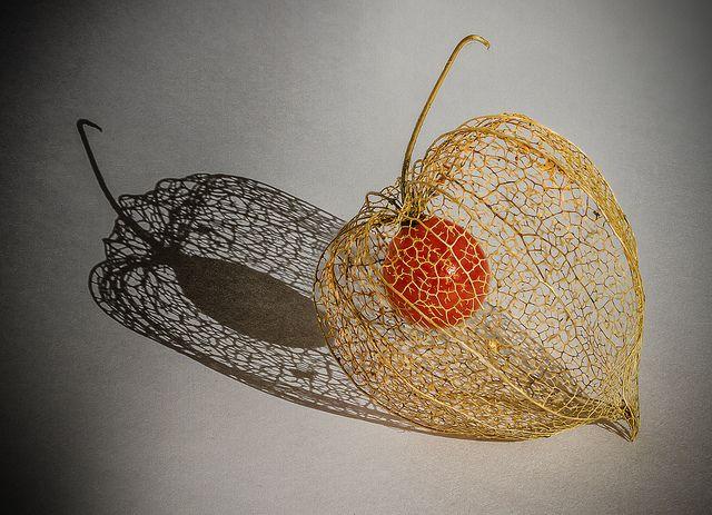 Les 150 meilleures images du tableau physalis amour en cage sur pinterest cage fleurs - Fruit cage d amour ...