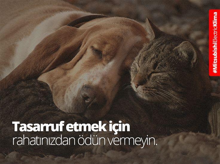 Üstün sezonsal verimlilik değerlerine sahip #MitsubishiElectricKlima tercih ederek ısınırken tasarruf edin! ►https://klima.mitsubishielectric.com.tr/ #klima #cool #köpek #puppy #cat #kedi #catstagram #climate #sıcak #happy #mutluluk #love #dog #cute #cozy #kış #uyku #sleep #fun #smile #şirin #tatlı #konfor #comfort #huzur #eğlence #KafamRahat #KonforluIsınma #akıllı #smart
