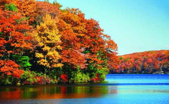Foliage e sapori autunnali del New England C'è un periodo dell'anno che gli abitanti del New England vivono con la stessa passione che i giapponesi dedicano all'Hanami. Parliamo delle settimane tra la fine di settembre e la metà d'ottobre, qu #foliage #autunno #usa #newengland