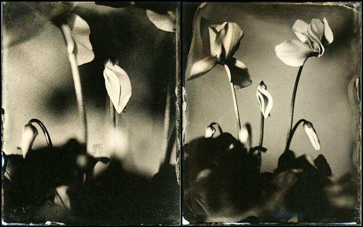 Gerda Lelieveld