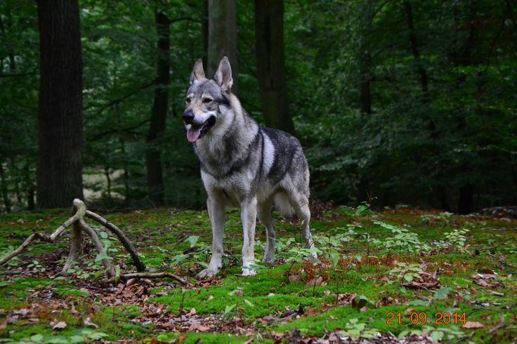 Spaziergang im Wald....