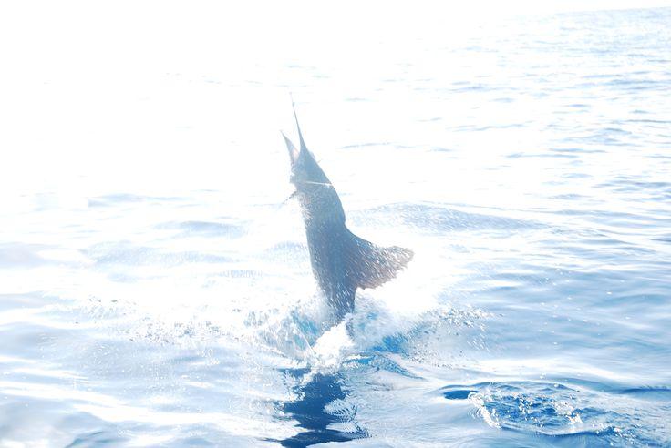 Kianah's Sportfishing Cancun in Cancún, Quintana Roo