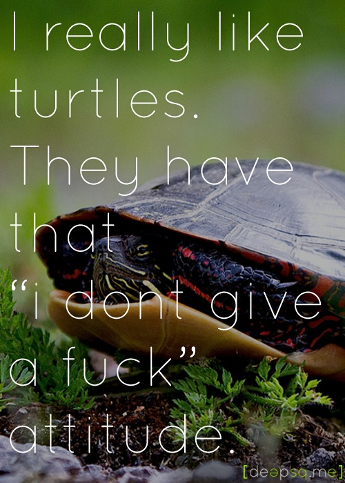 """I really like turtles. They have that """"i dont give a fuck"""" attitude. — Kurt Cobain"""