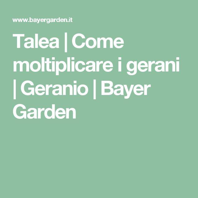 Talea | Come moltiplicare i gerani | Geranio | Bayer Garden