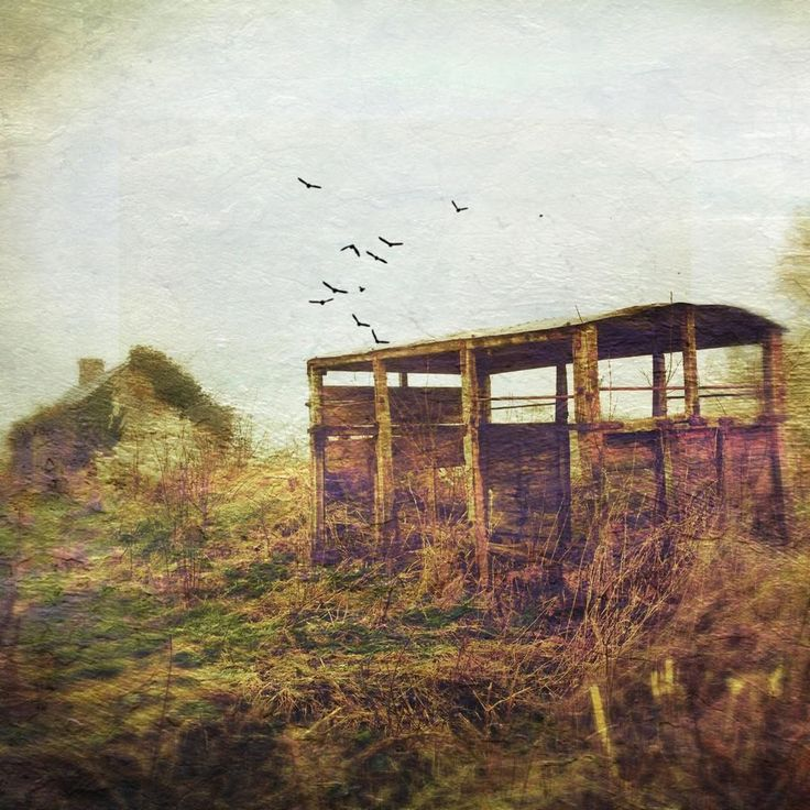Crow turned the words into bombs - they blasted the bunker. The bits of bunker flew up a flock of starlings. #poetry #tedrogers #crowgoeshunting #offaly #ireland #distressedfx #ruin #abandoned #barn #cottage #beauty #birds #instaireland